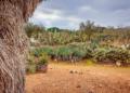Mallorca-Botanicactus-24-120x86