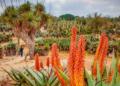 Mallorca-Botanicactus-26-120x86