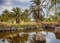 Mallorca-Botanicactus-32-120x86