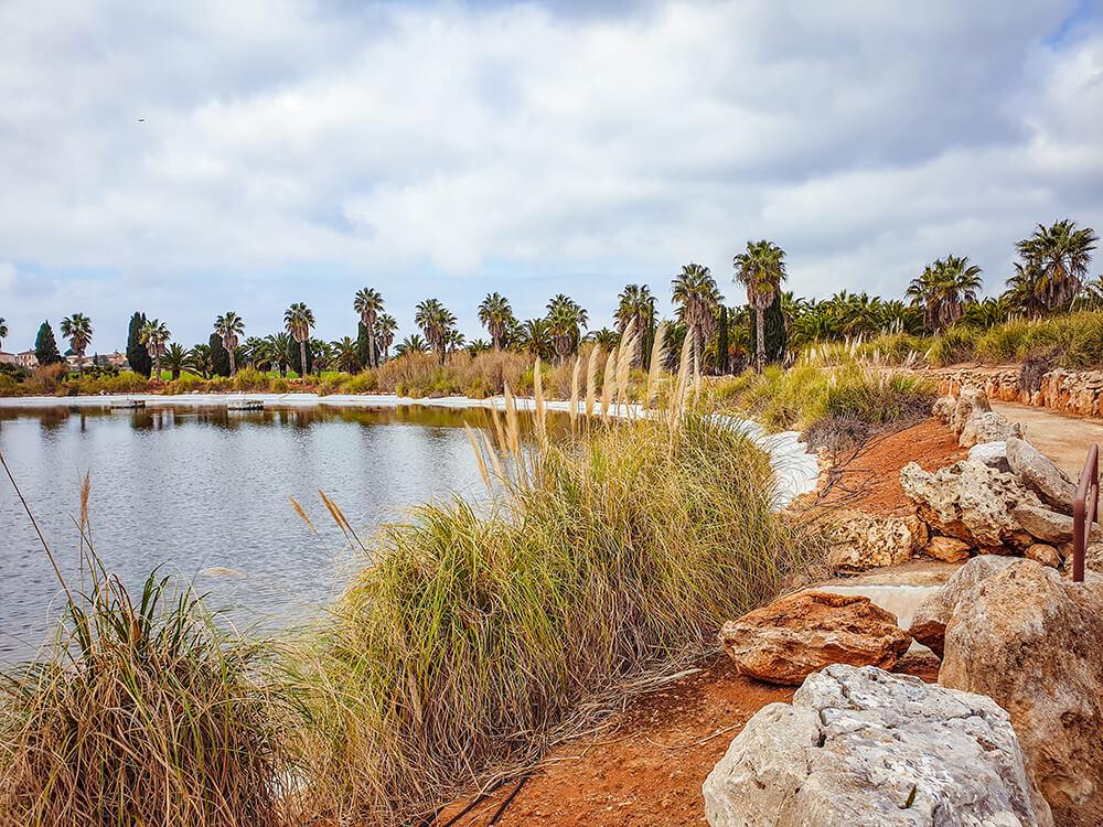 Mallorca-Botanicactus-34