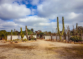 Mallorca-Botanicactus-38-120x86