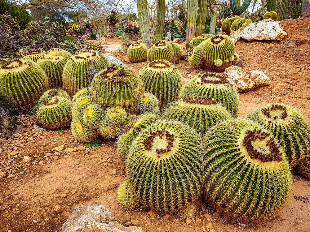 Mallorca-Botanicactus-41