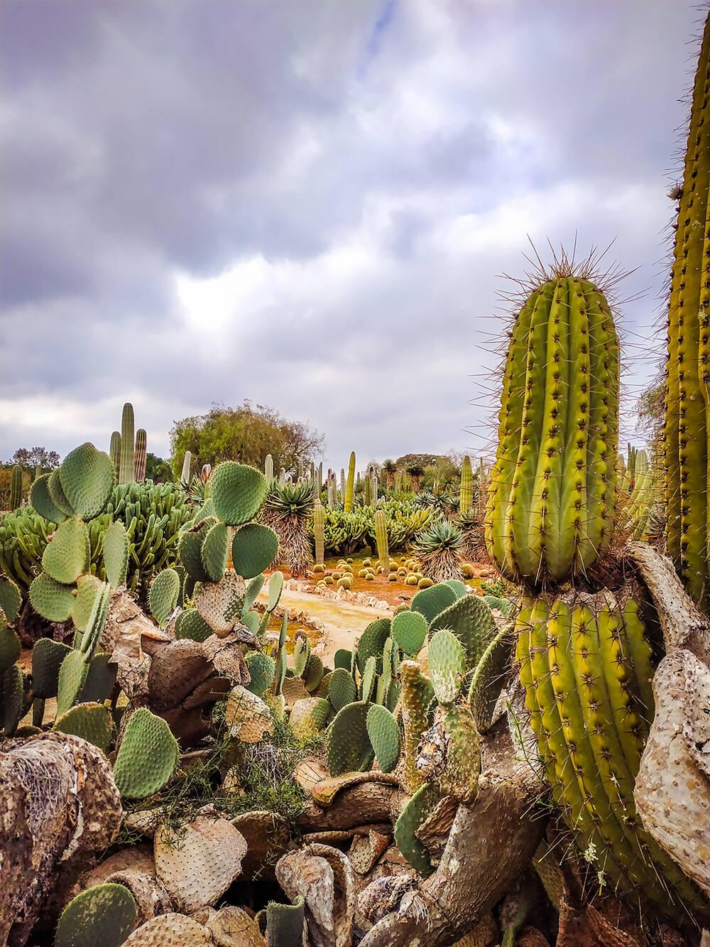 Mallorca-Botanicactus-45