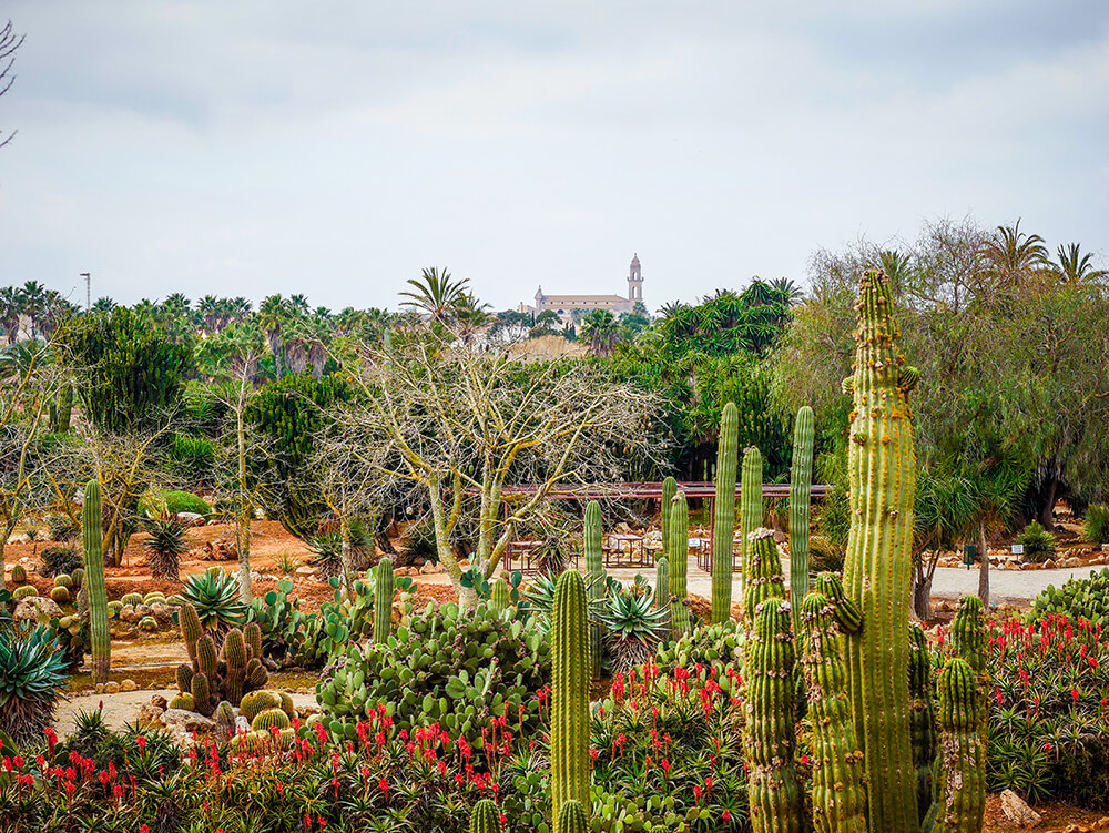 Mallorca-Botanicactus-5