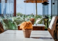 Mallorca-Landhotel-Es-Turo-15-120x86