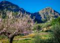 Mallorca-Mandelbluete-Fruehling-11-120x86