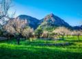 Mallorca-Mandelbluete-Fruehling-12-120x86