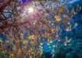 Mallorca-Mandelbluete-Fruehling-19-120x86