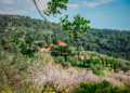 Mallorca-Mandelbluete-Fruehling-2-120x86
