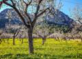 Mallorca-Mandelbluete-Fruehling-22-120x86