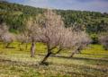 Mallorca-Mandelbluete-Fruehling-7-120x86