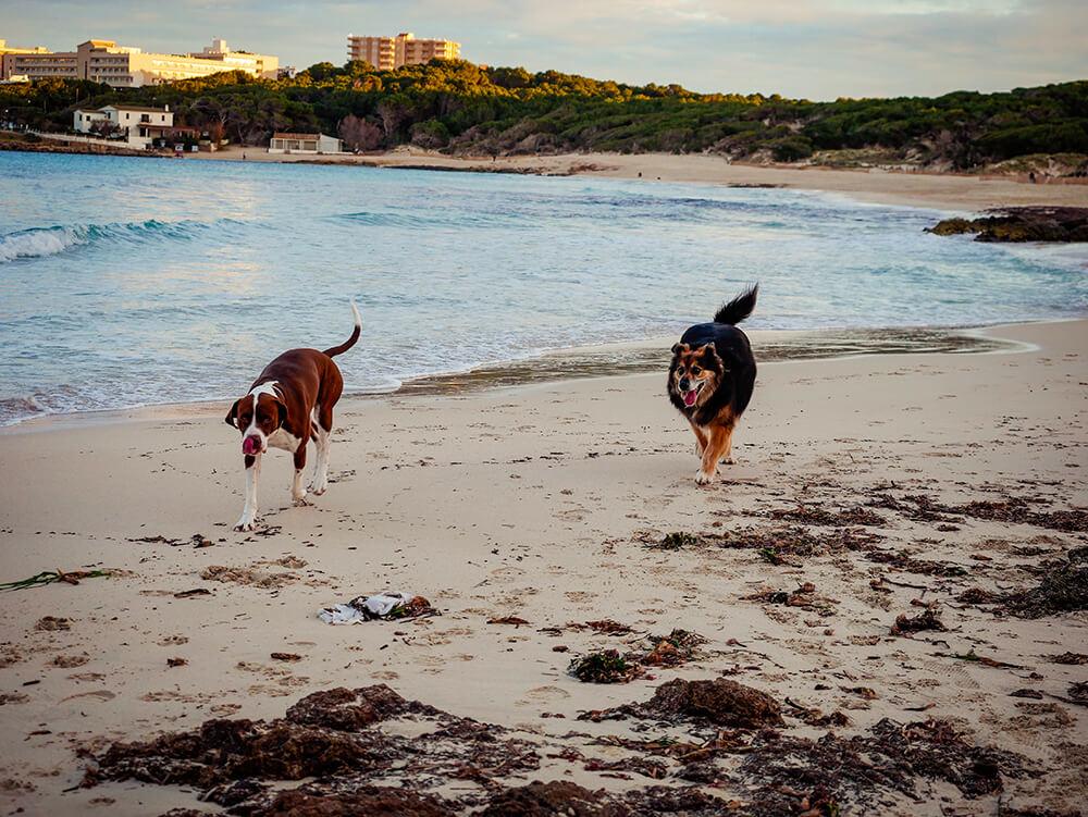 Mallorca-Hunde-Winter-Strand-Cala-Agulla-Cala-Ratjada-4