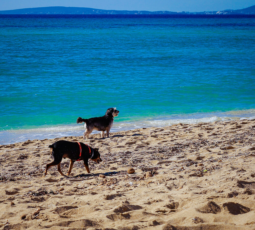 Mallorca-Hunde-Winter-Strand-Can-Pastilla-Playa-de-Palma-2