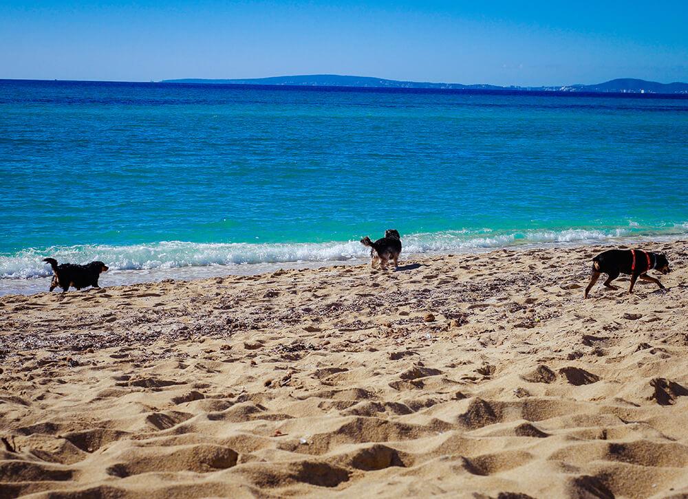 Mallorca-Hunde-Winter-Strand-Can-Pastilla-Playa-de-Palma-3