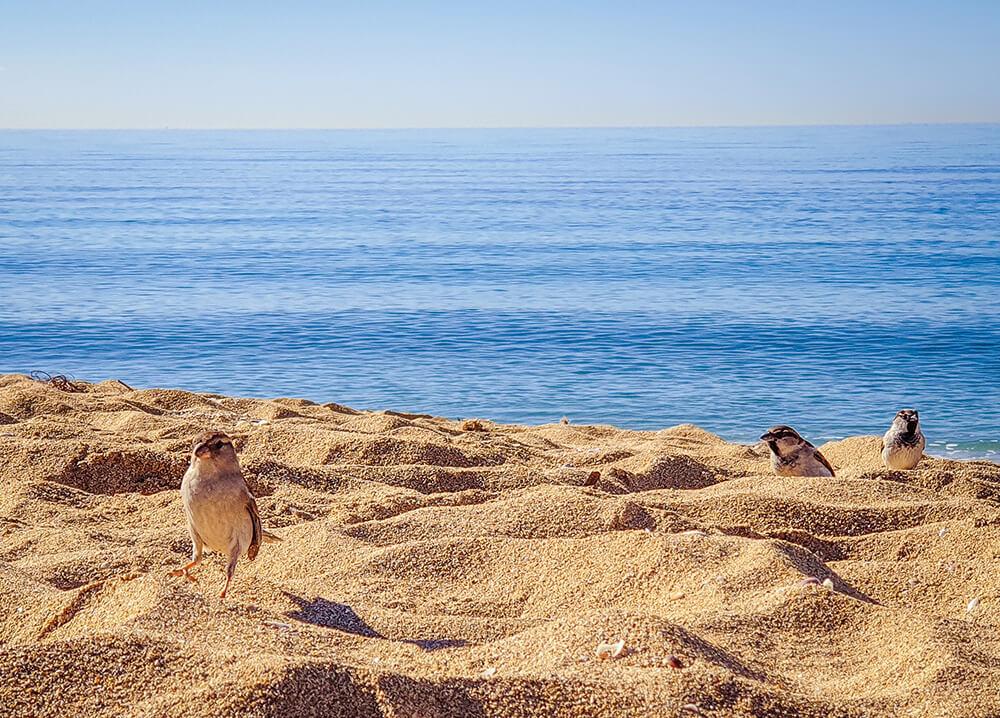 Mallorca-Hunde-Winter-Strand-Can-Pastilla-Spatzen