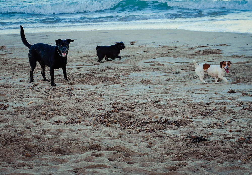 Mallorca-Hunde-Winter-Strand-Can-Picafort-2