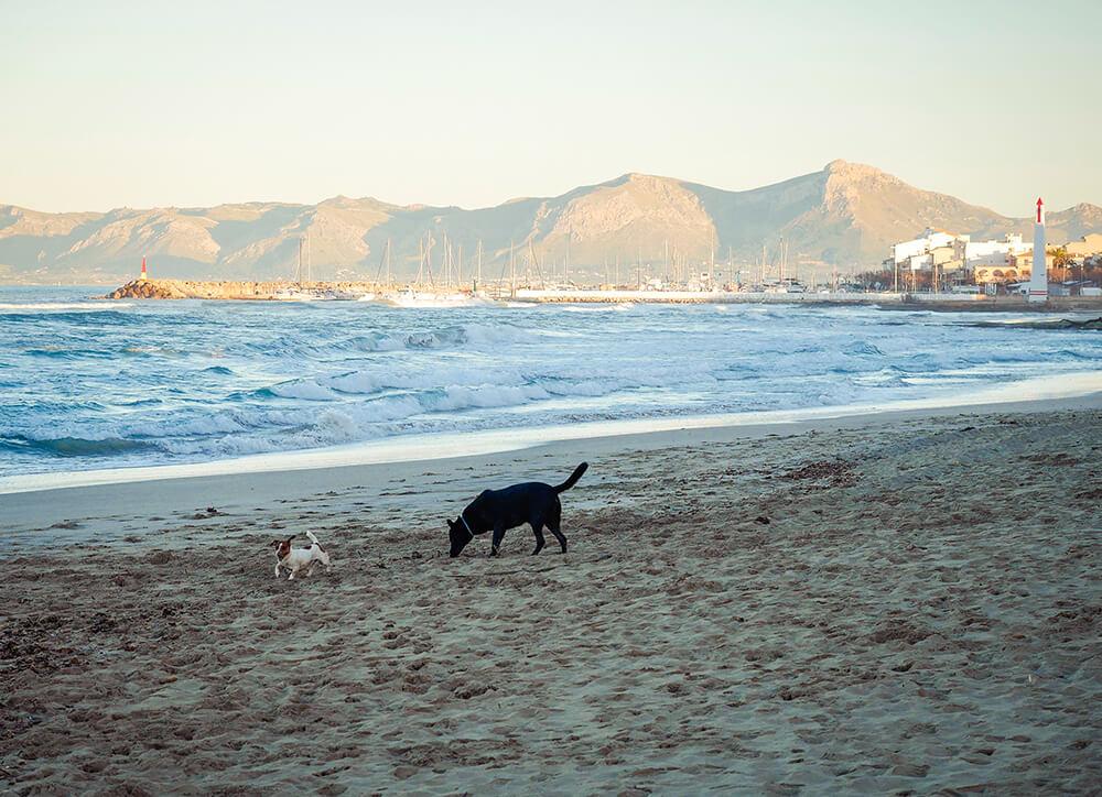 Mallorca-Hunde-Winter-Strand-Can-Picafort