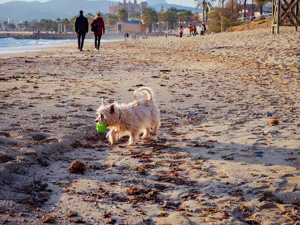 Mallorca-Hunde-Winter-Strand-Playa-de-Palma-2