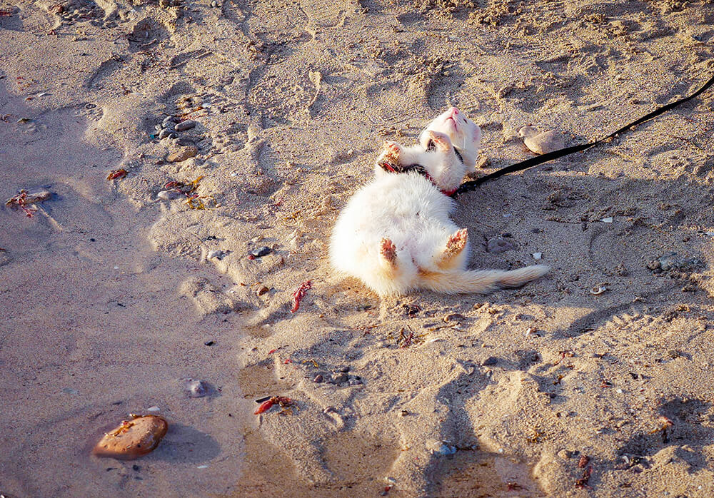 Mallorca-Hunde-Winter-Strand-Playa-de-Palma-Frettchen-2