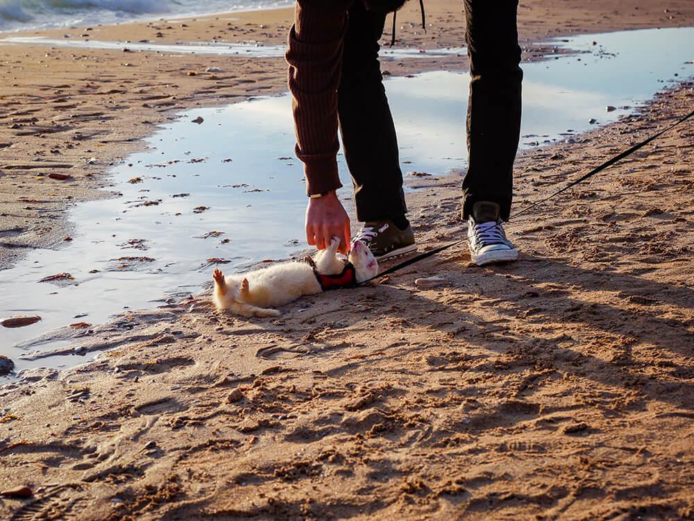 Mallorca-Hunde-Winter-Strand-Playa-de-Palma-Frettchen-3