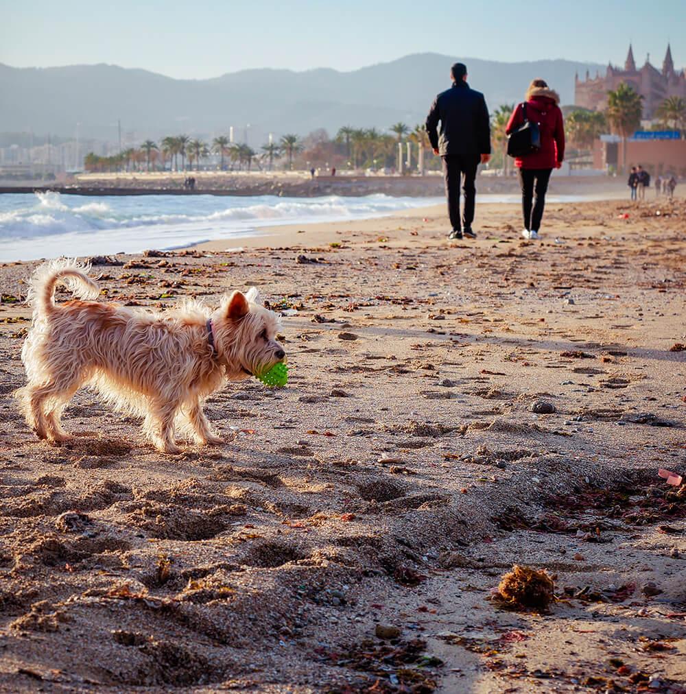 Mallorca-Hunde-Winter-Strand-Playa-de-Palma-Kathedrale-La-Seu