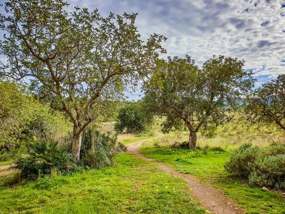 Mallorca-Cala-Ratjada-Agulla-Wanderung-7