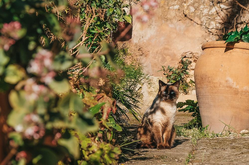 Mallorca-Fincahotel-Refugio-Son-Pons-Garten-8