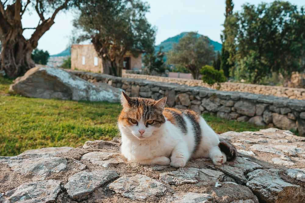 Mallorca-Fincahotels-Ses-Cases-de-Fetget-13