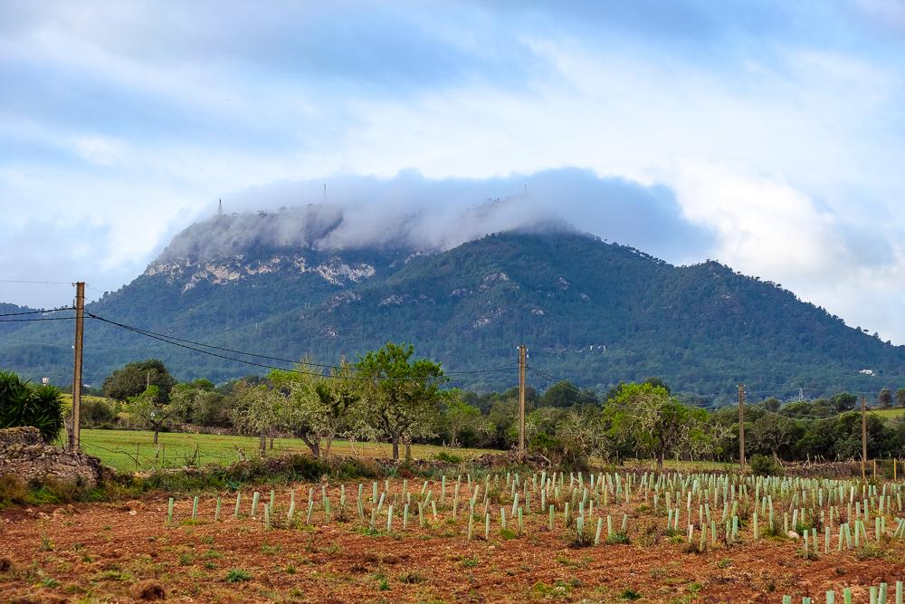 Mallorca-Santuari-de-Sant-Salvador-Sonnenaufgang-Nebel-1