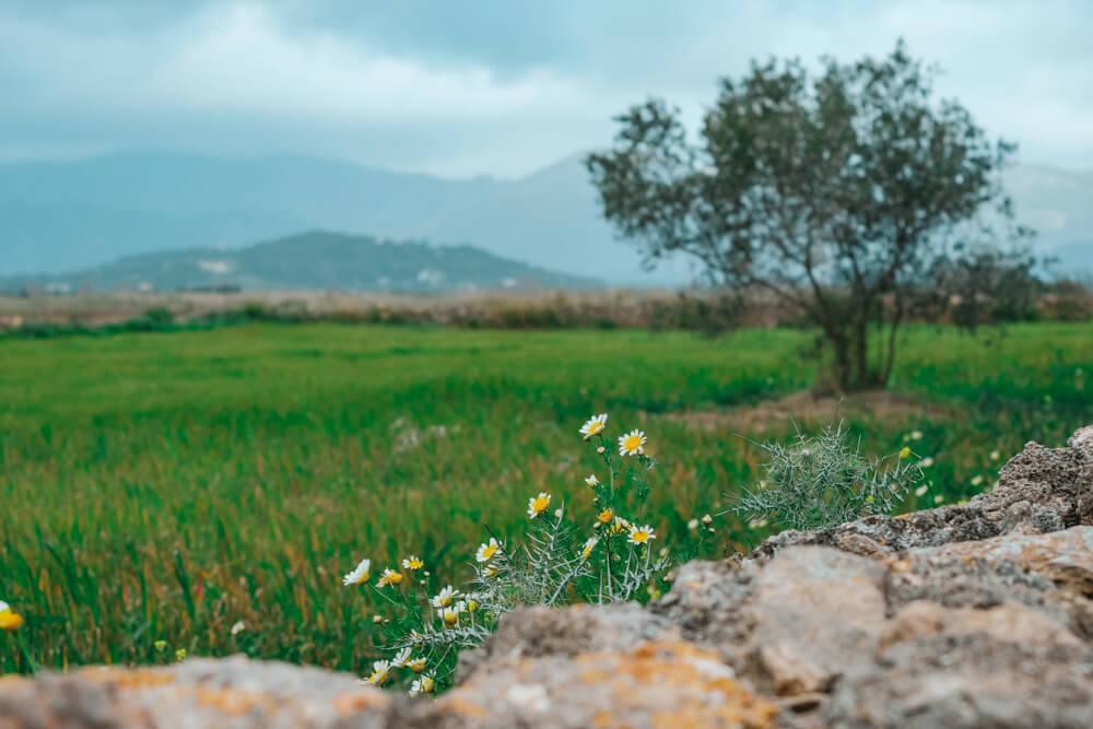 Mallorca-SAlbufereta-Naturpark-16