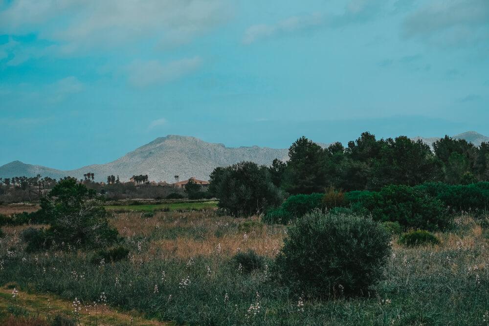 Mallorca-SAlbufereta-Naturpark-Ausblick-Berge-2