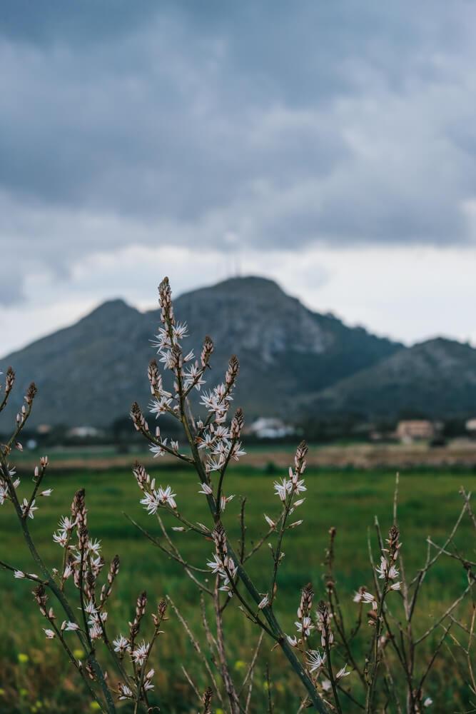 Mallorca-SAlbufereta-Naturpark-Ausblick-Berge